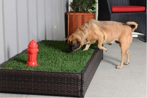 Should You Use A Dog Grass Pad For Your Pet Bestfakegrasses Com Great news!!!you're in the right place for grass pad. dog grass pad for your pet