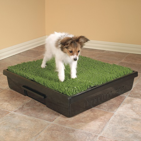 Should You Use A Dog Grass Pad For Your Pet Bestfakegrasses Com Buy the best and latest grass pad on banggood.com offer the quality grass pad on sale with worldwide free shipping. dog grass pad for your pet