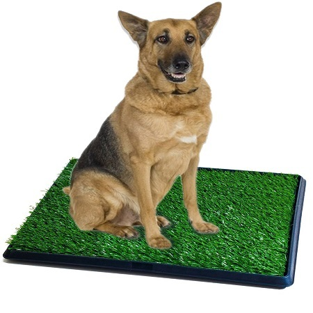 Everything You Need To Know About Fake Grass