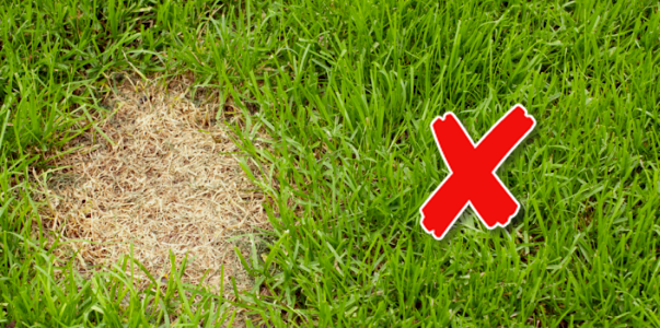 dog pee stains on grass